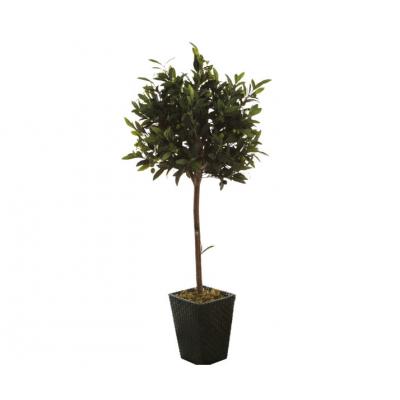 Оливковое дерево Villa Verde